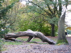 Hampstead Heath 3